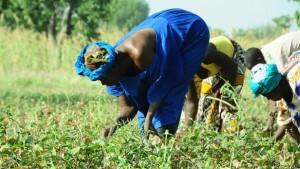Farmers in Cinzana village, Mali. Photo by: P. Casier / CGIAR / CC BY-NC-SA