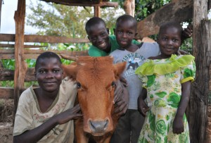 Children with calf. Credit, Heifer International, Kenya.