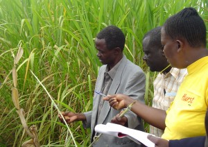 Farmer and researchers assess crops. Credit, CIMMYT.