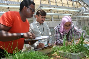 Participants in CIMMYT's 2011Wheat Improvement and Pathology training program, attended by scientists from Africa, Asia, Europe, and South America. Credit, X. Fonseca, CIMMYT.