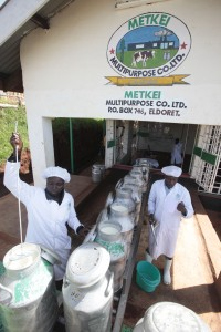 Kamwosor Centre Village, Keiyo County, Rift Valley Provence, Kenya Cynthiah Kipkorir (left) and Felix Kibet, both clerks at the Metkei Multipurpose Company Limited, inspect milk in Kamwosor Centre village on Monday May 16, 2011.