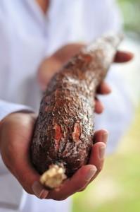 A healthy cassava root. Credit, N. Palmer, CIAT.