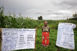 Demonstrating conservation agriculture to other farmers in Malawi. Credit T.Samson CIMMYT