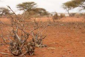 Barren landscape. Credit Anna Ridout, Oxfam