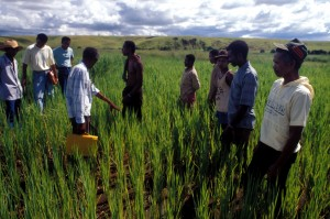 Farmers and researchers of the Madagascar-IRRI Rice Research Project. Credit, IRRI.