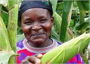 Maize. Credit USAID