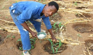Microdosing & Conservation Agriculture in Zimbabwe. Credit ICRISAT