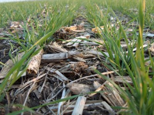 No-till conservation agriculture. Credit A4I