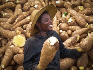 Vitamin A Cassava, Nigeria. Credit HarvestPlus