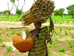 Woman farmer takes home pearl millet. Credit ICRISAT
