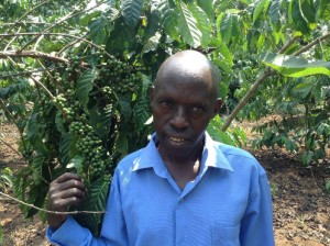 Kigundu Gerald, a KCFCS member since 2006, with his coffee plants. Credit, KCFCS.
